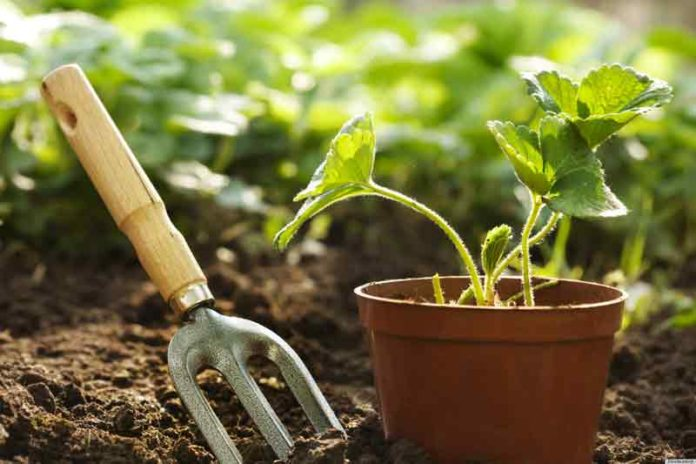 Fare Giardinaggio